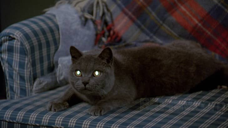Church The cat from Pet Sematary (1989)